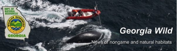DNR e-news masthead; photo of whale work